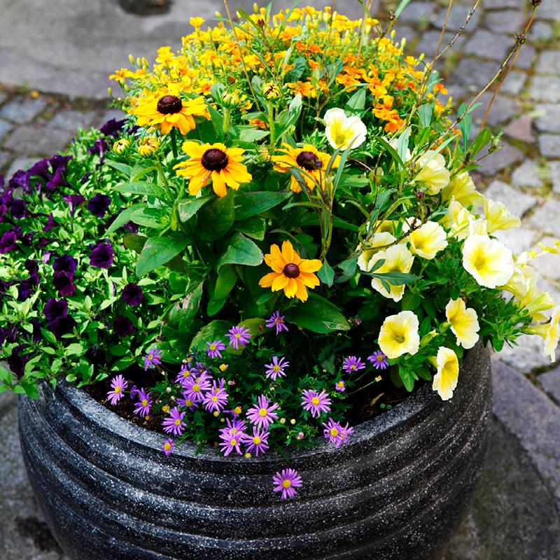 Utomhuskruka med blommor