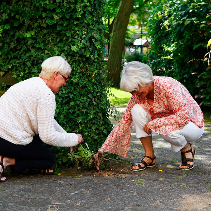 Två kvinnor rensar ogräs.