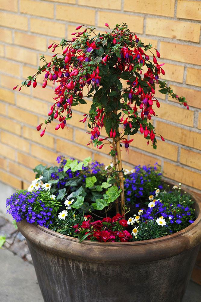Blomkruka utomhus