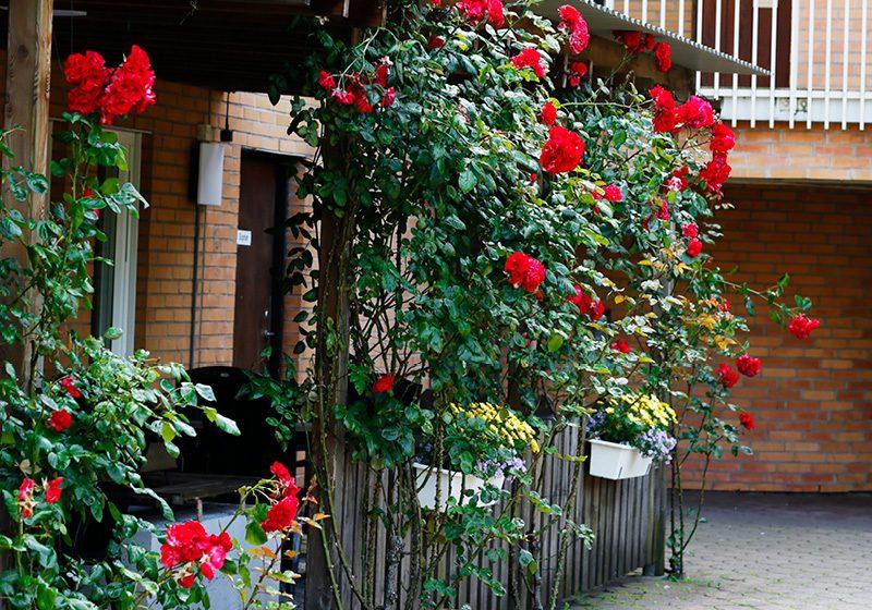 Rosspalje med röda rosor